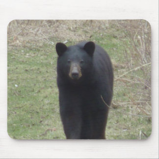Bear visiting mouse pad