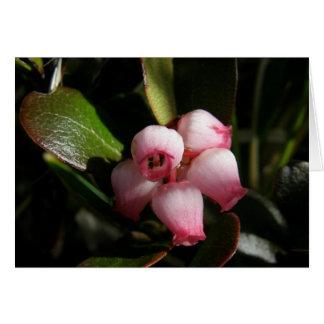 Bearberry Blossoms, Arctostaphylos uva-ursi Card