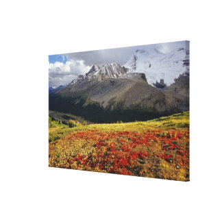 Bearberry in early autumn Athabasca Peak in the Canvas Print