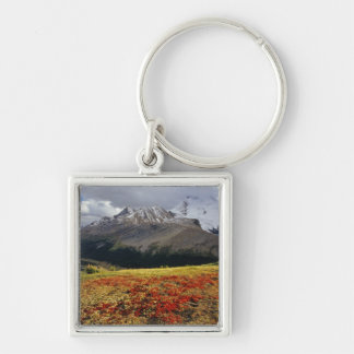 Bearberry in early autumn Athabasca Peak in the Keychain