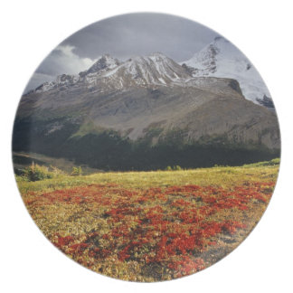 Bearberry in early autumn Athabasca Peak in the Melamine Plate