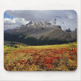 Bearberry in early autumn Athabasca Peak in the Mouse Pad