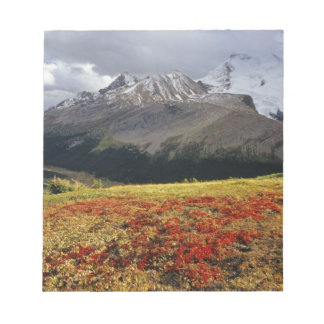 Bearberry in early autumn Athabasca Peak in the Notepad