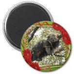 bearcat-00020-85x85 imán para frigorifico