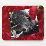 bearcat-00025-85x85 mousepad