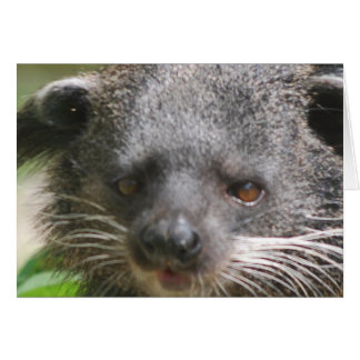 Bearcat Greeting Card