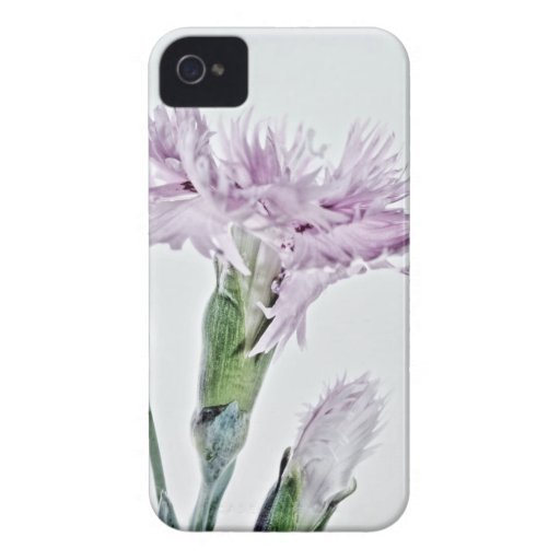 Beard carnation photographed by Tutti iPhone 4 Case-Mate Cases