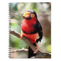 Bearded Barbet Spiral Photo Notebook