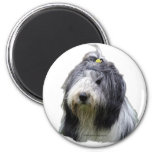 bearded collie 2 inch round magnet