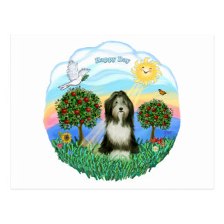 Bearded Collie #8 Postcard