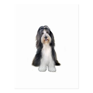 Bearded Collie (D) - Slate and white Postcard