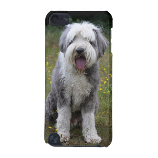 Bearded Collie dog ipod touch 5G case, gift idea iPod Touch 5G Case