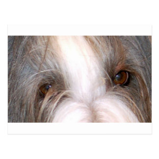 Bearded_collie eyes.png postcard