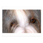 Bearded_collie eyes.png postcards
