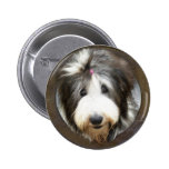Bearded collie face in old wooden frame button