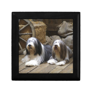 Bearded Collie Gift Box