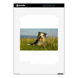 Bearded Collie laying.png Skin For The iPad 2