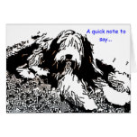 Bearded Collie Note Card