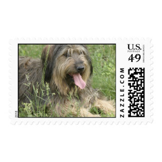 Bearded Collie Postage Stamp