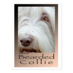 Bearded Collie Postcards