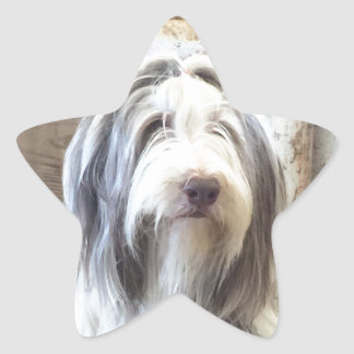 Bearded Collie Star Stickers