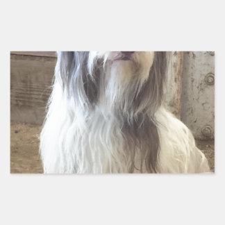 Bearded Collie Rectangular Stickers