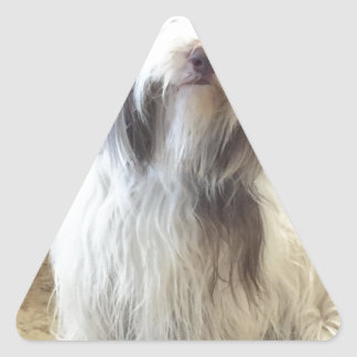 Bearded Collie Stickers