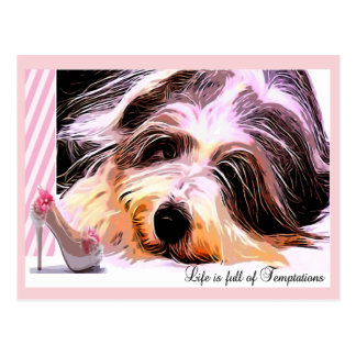 Bearded Collie Temptation Postcard