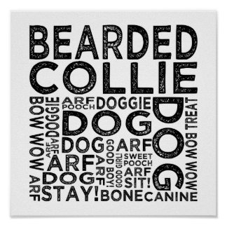 Bearded Collie Typography Poster