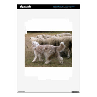 bearded collie working.png decals for iPad 3