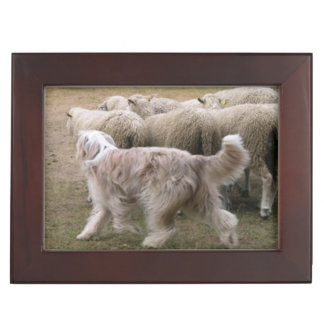 bearded collie working.png memory box