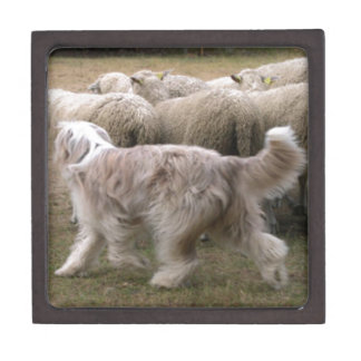 bearded collie working.png premium gift box