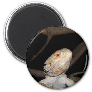 Bearded dragon 2 refrigerator magnets