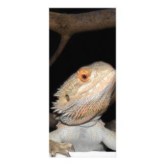 Bearded dragon 2 rack card