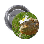 Bearded dragon buttons