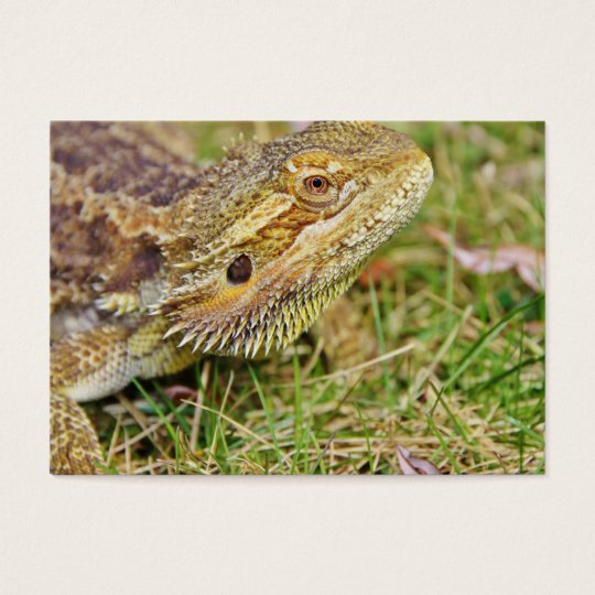 Bearded Dragon Head Business Card