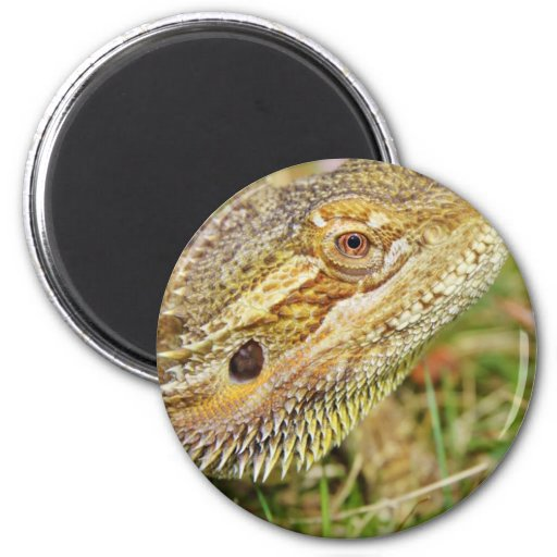 Bearded Dragon Head Refrigerator Magnets