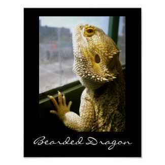 Bearded Dragon in the Window Poster print