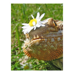 Bearded dragon letterhead