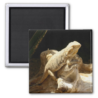 Bearded Dragon Lizard 2 Inch Square Magnet