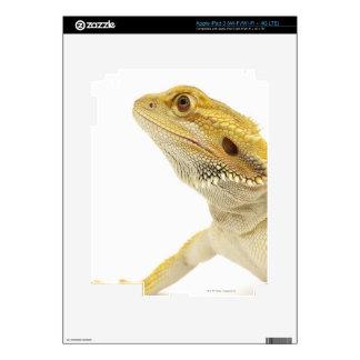 Bearded dragon (Pogona Vitticeps) iPad 3 Skin