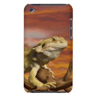 Bearded dragon (Pogona Vitticeps) on branch, Barely There iPod Case