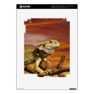 Bearded dragon (Pogona Vitticeps) on branch, iPad 3 Decals