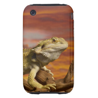 Bearded dragon (Pogona Vitticeps) on branch, iPhone 3 Tough Cover