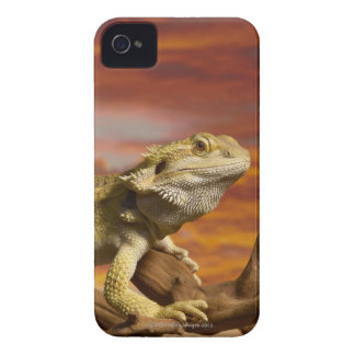 Bearded dragon (Pogona Vitticeps) on branch, iPhone 4 Cover