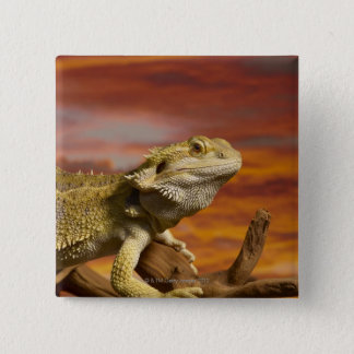 Bearded dragon (Pogona Vitticeps) on branch, Pinback Button