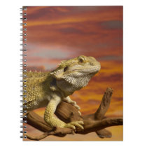 Bearded dragon (Pogona Vitticeps) on branch, Spiral Notebook