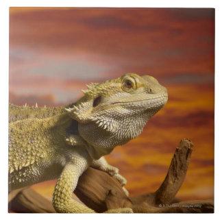 Bearded dragon (Pogona Vitticeps) on branch, Ceramic Tiles