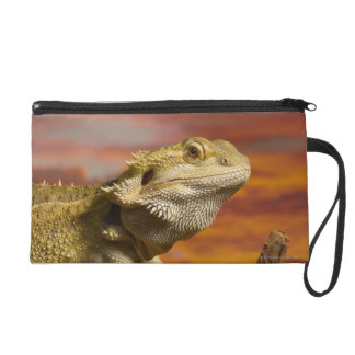 Bearded dragon (Pogona Vitticeps) on branch, Wristlet