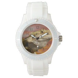Bearded dragon (Pogona Vitticeps) on branch, Wristwatch